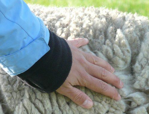Wussten Sie schon… Infos zur Schafswolle