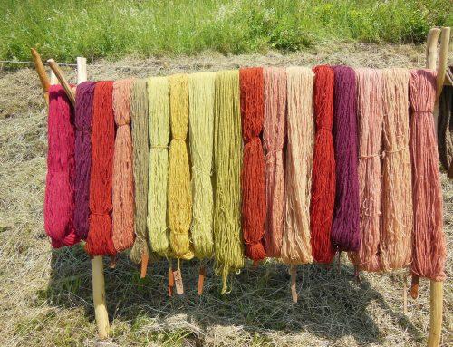 Workshop: Wolle färben mit Pflanzenfarben